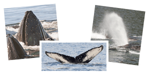 Whale Watching gallery button