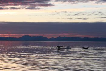 Another day closes with a serene scene of diving whales and a lingering sunset